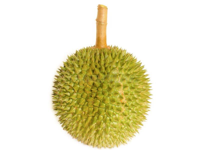 King of fruit, durian stock image