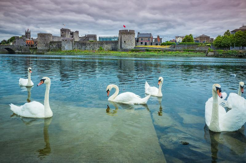 King John`s Castle. With many swans in the foreground, Limerick, Ireland stock photo