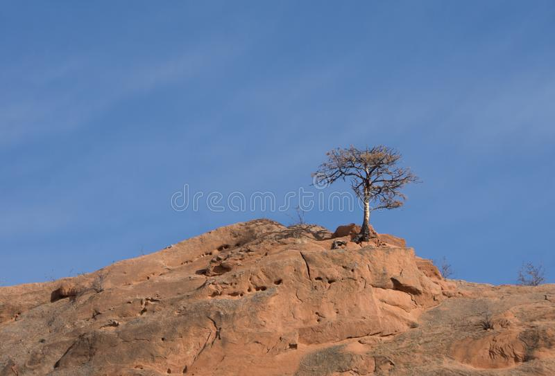 Bare Tree Alone on a Red Rock Mountaintop with Blue Sky royalty free stock photography
