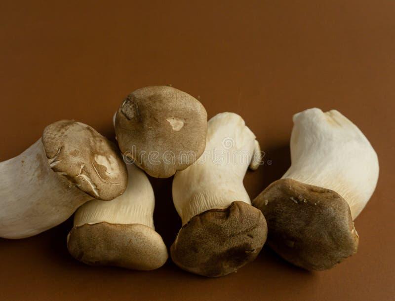 King oyster mushroom Pleurotus eryngii on brown background,Pleurotus Eryngii (King Oyster Mushroom) isolated on brown. Beige, cap, edible, eringi stock image
