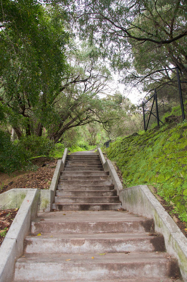 King& x27 ; parc de s : Forest Stairs photo stock