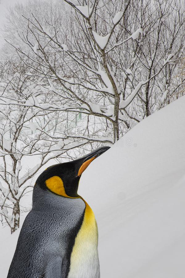 King penguins from Asahiyama zoo, Hokkaido, superimposed or double exposures with a scene from Niseko, Japan. royalty free stock photography