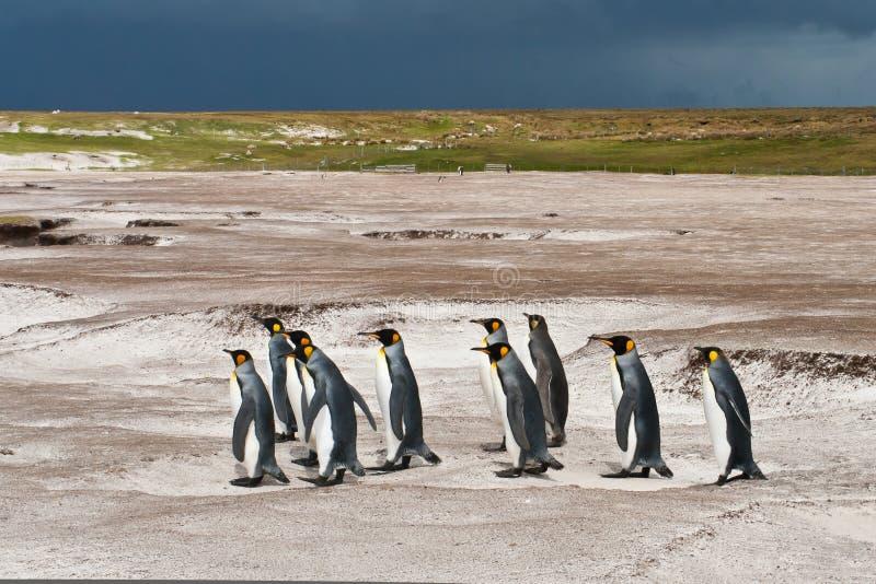 Download King penguins group stock image. Image of sand, fauna - 33235317