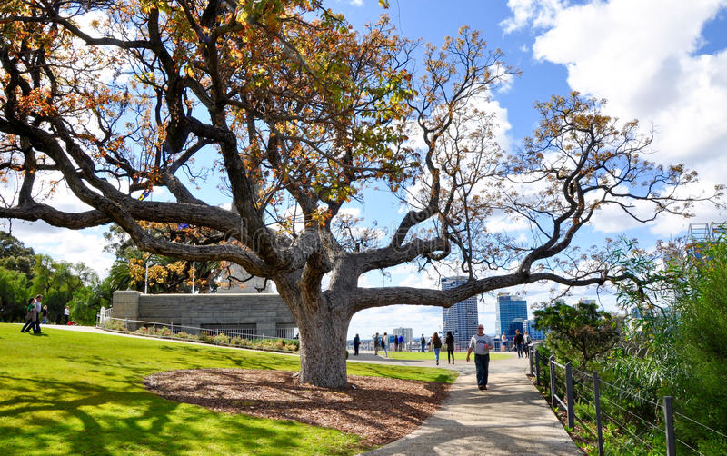 King's Park: Tree of Life stock images