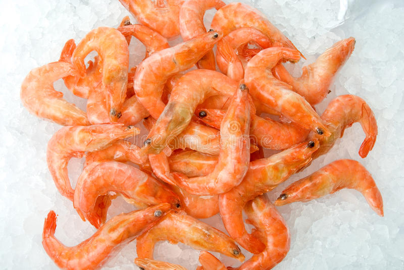 Download King shrimps stock image. Image of ethnic, nutrition - 11285069