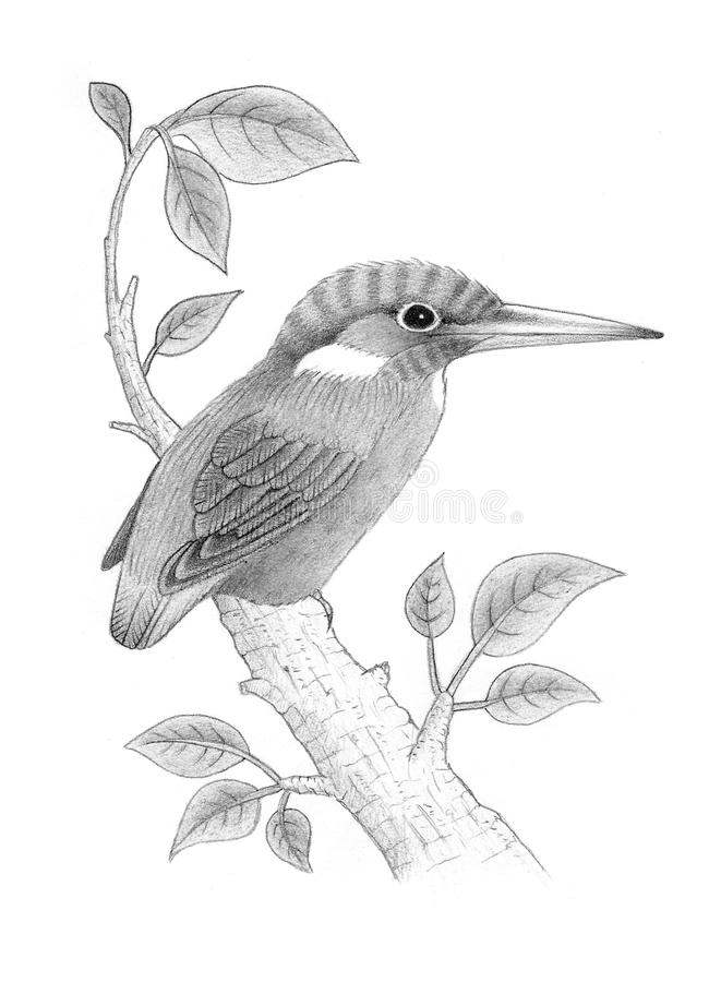 Download Kingfisher stock illustration. Image of sketch, feathers - 25736215