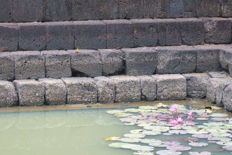 A kingfisher and Lotus pond at Prasat Muang Tam in Buriram, Thailand. Buriram,Thailand-December 8, 2019:  A kingfisher and Lotus pond at Prasat Muang Tam in stock photo