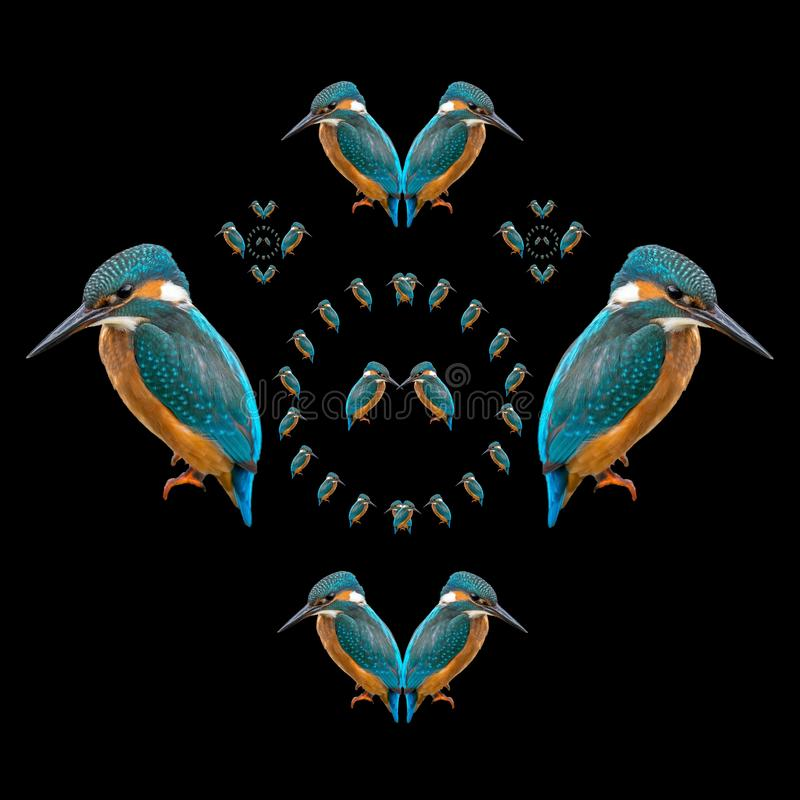 Kingfisher symmetry. Because I admire the beauty of nature and because I find symmetry pleasing, I decided to create this digital mandala artwork, displaying the vector illustration