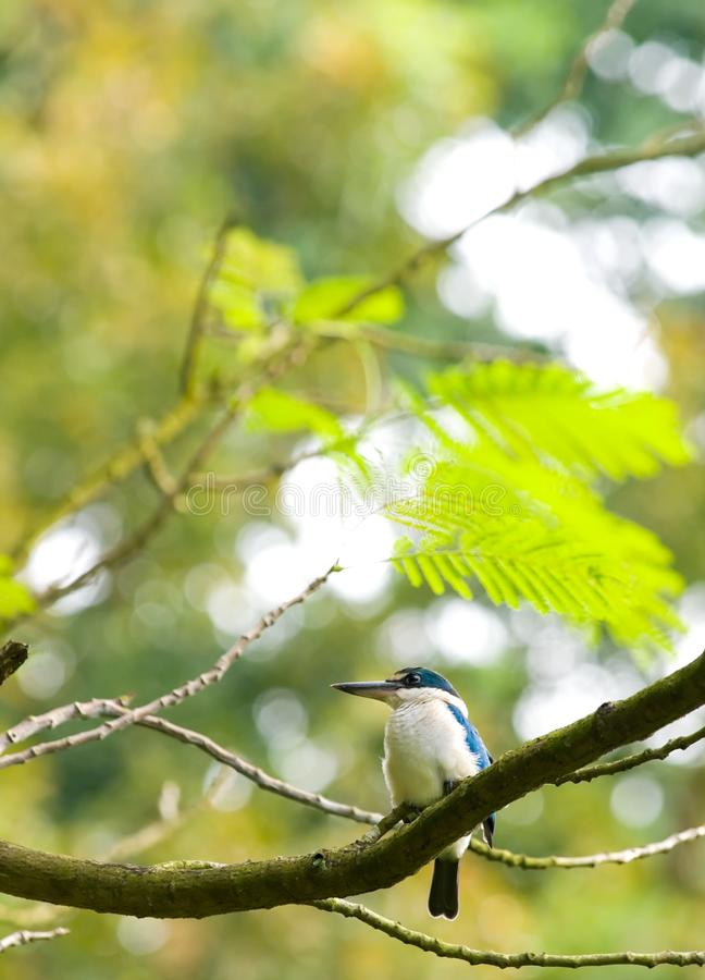 Download Kingfisher in Tree stock image. Image of branches, green - 5867009
