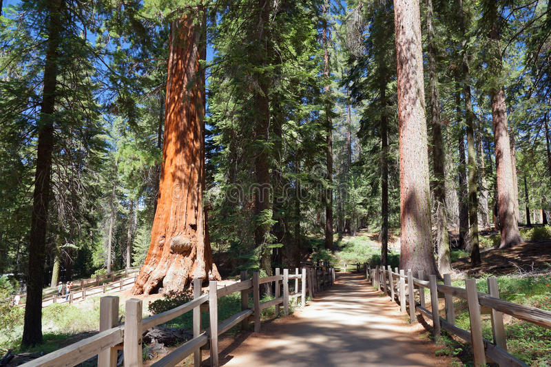 Kings canyon national forest stock image