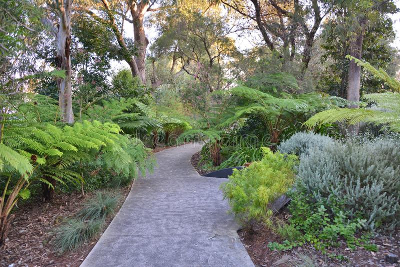 Kings Park botanical garden. Footpath through green ferns in Kings Park in Perth, Australia royalty free stock images