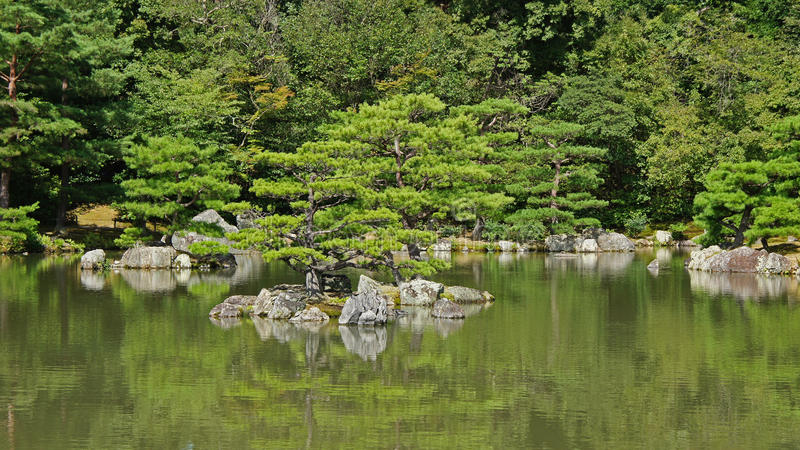 Kinkaku ji,金黄寺庙池塘在京都 图库摄影