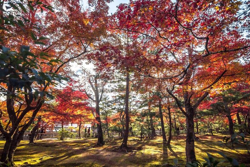 Kinkaku-ji świątynia z Czerwonym liściem w jesień sezonie obraz royalty free