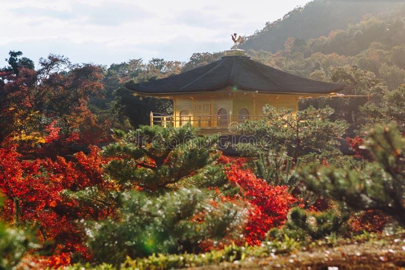 Kinkaku-ji świątynia z Czerwonym liściem w jesień sezonie fotografia royalty free