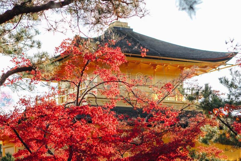 Kinkaku-ji świątynia z Czerwonym liściem w jesień sezonie zdjęcie stock