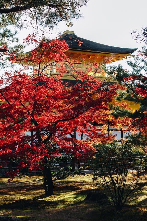 Kinkaku-ji świątynia z Czerwonym liściem w jesień sezonie zdjęcia stock
