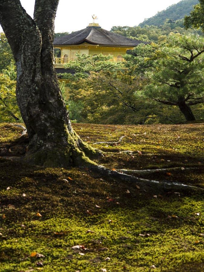 Kinkakuji guld- paviljong som ses från trädgården arkivbilder