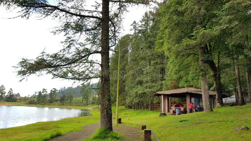 Kiosk w lesie zdjęcie royalty free