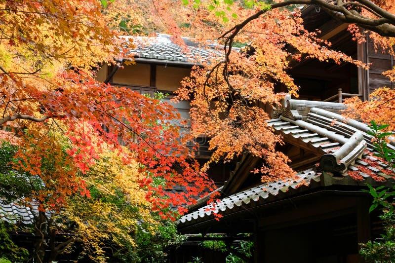 Kioto Jesienne liście Rurikoin obrazy stock