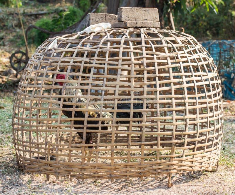 Kip in de kippenren stock afbeelding