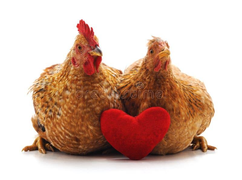 Kip en haan met hart stock fotografie