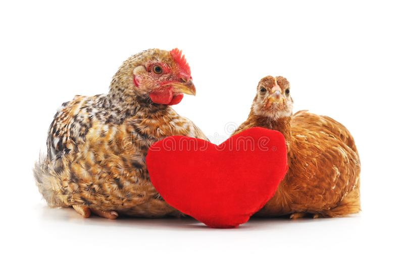 Kip en haan met hart royalty-vrije stock afbeeldingen