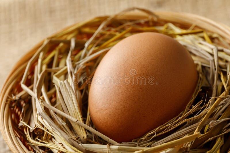 Kip of kippenei op stro in rieten mand op jute stock fotografie