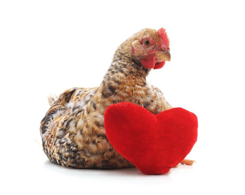 Kip met een stuk speelgoed hart stock fotografie