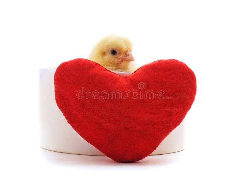 Kip met een stuk speelgoed hart stock afbeelding