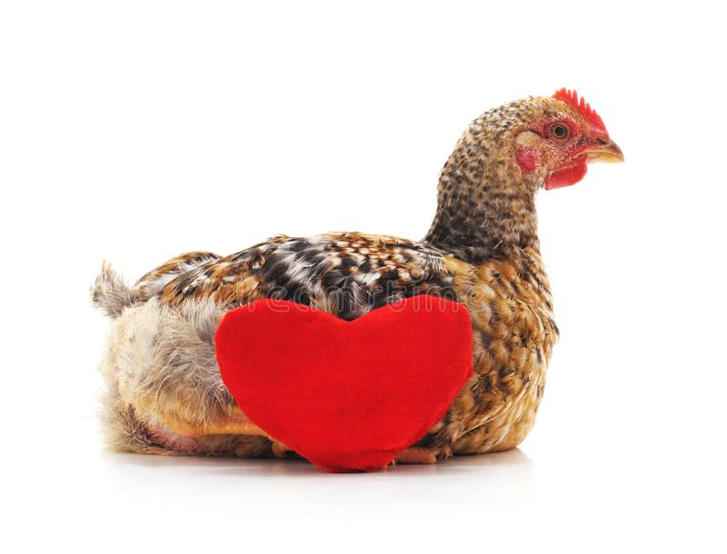 Kip met hart royalty-vrije stock foto