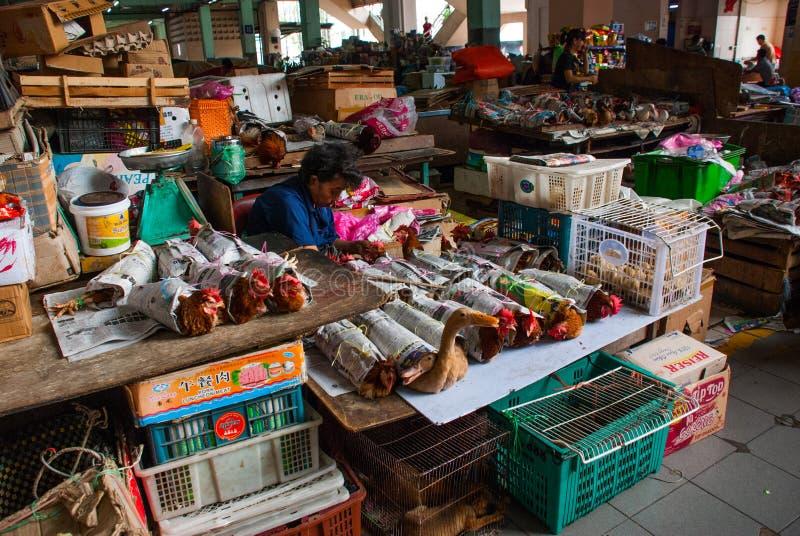 Kip met oude krant op marktvertoning bij de Centrale Markt die van Sibu wordt verpakt Sibu Sarawak Maleisië royalty-vrije stock foto's
