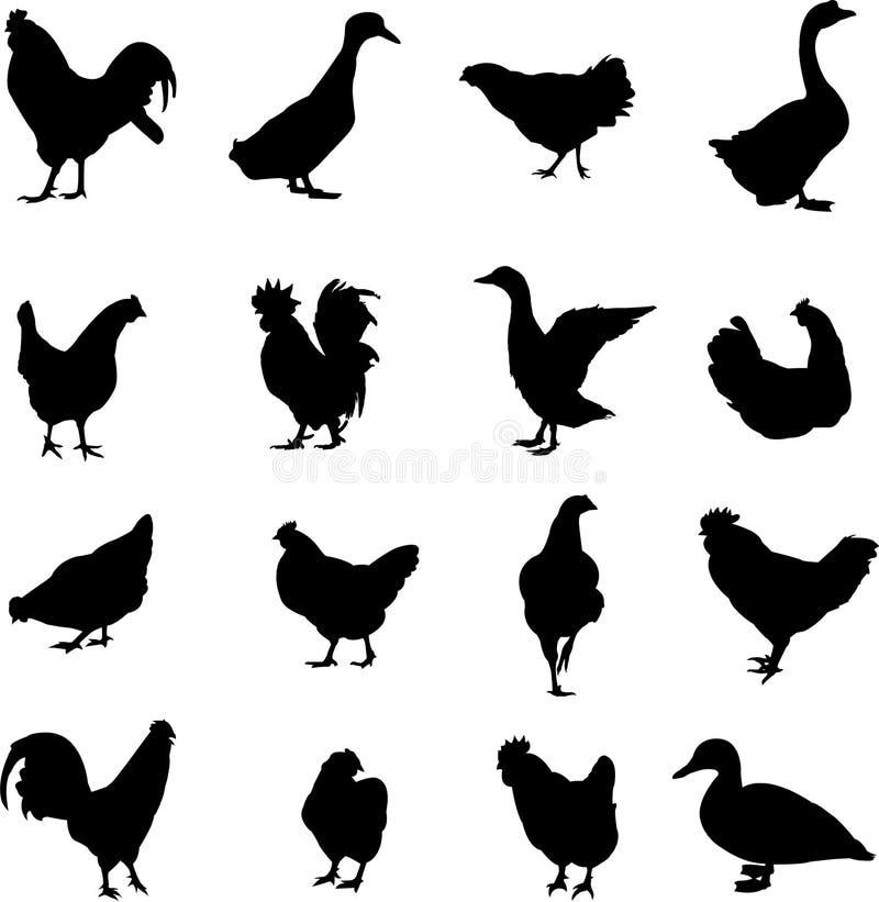 Kippen, eenden en ganzen royalty-vrije illustratie