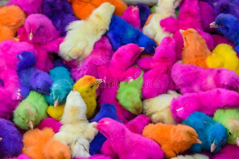 Kippen gekleurde babys Een groep grappige, kleurrijke Pasen kuikens royalty-vrije stock foto