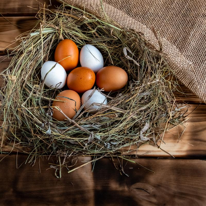 Kippenei in het nest royalty-vrije stock foto