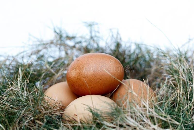 Kippenei in Nest royalty-vrije stock fotografie