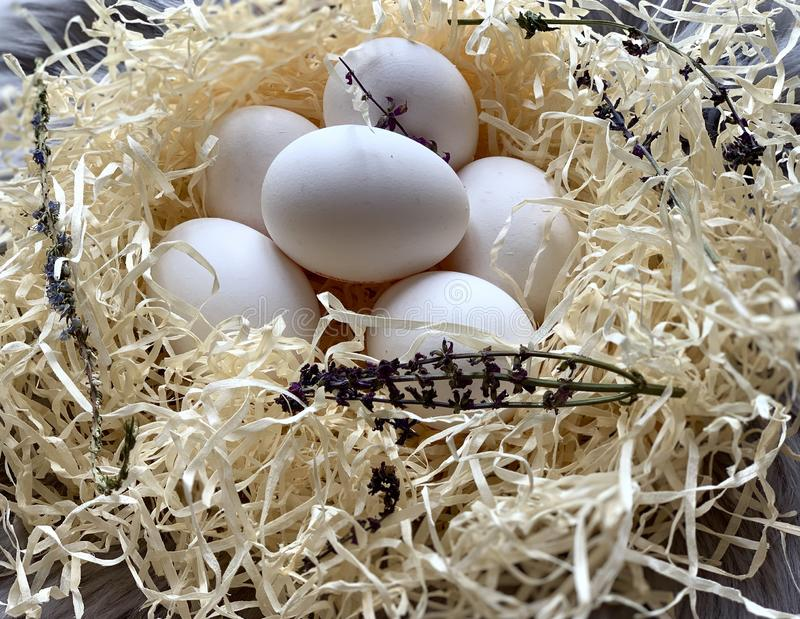 Kippeneieren in de nest Mooie witte eieren stock afbeelding