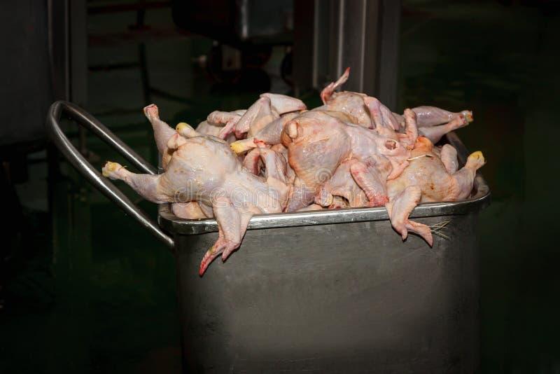 Kippenkarkas beneden de maat in een metaaltank Voedselafval royalty-vrije stock fotografie