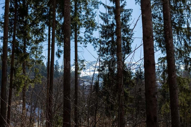 Kirchberg in Tirol, Tirol/Austria - March 24 2019: View through the forest on the Austrian mountains stock images