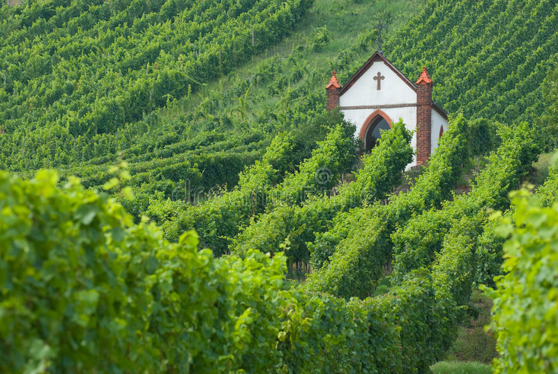 Kirche im Weinberg stockfoto