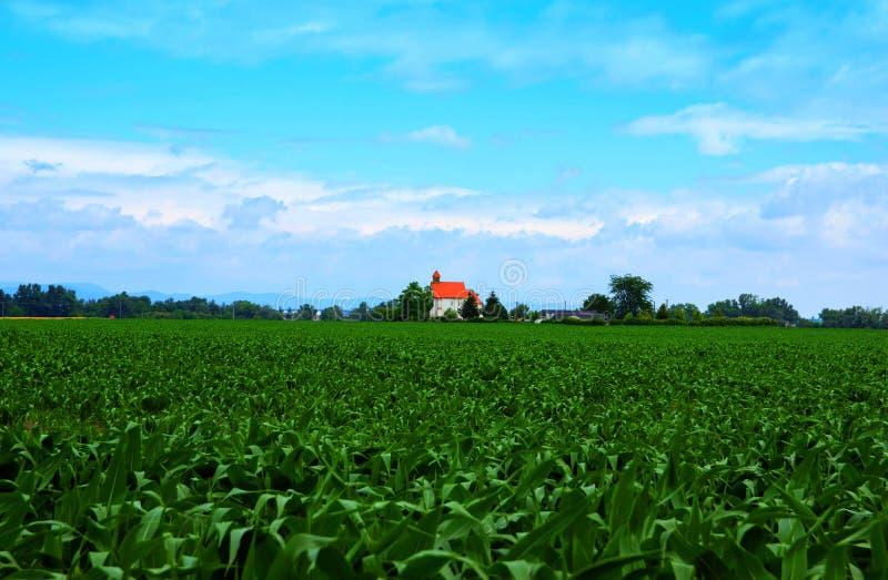 Kirche mitten in Mais-Feld stockfotografie