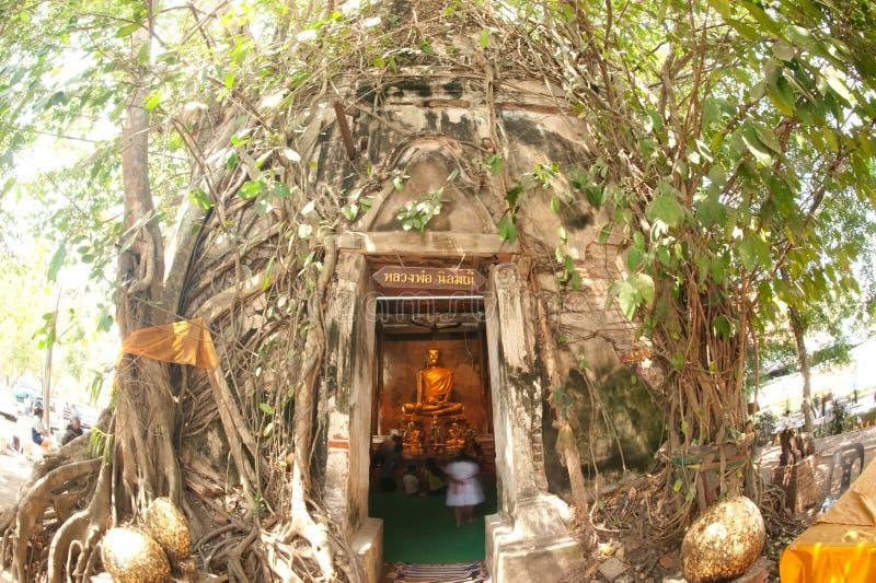 Kirche umfaßte oben die Wurzeln, Thailand. stockfoto