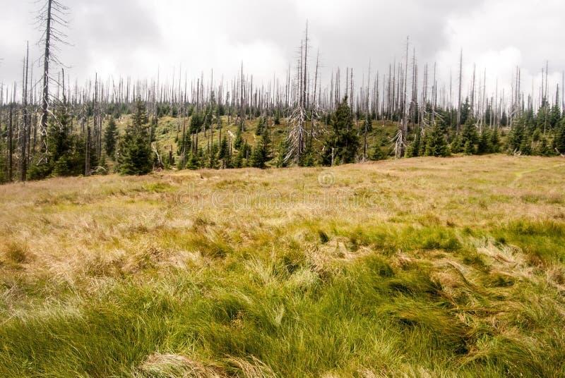 Kirchlinger立场巴法力亚森林山的山草甸 库存照片