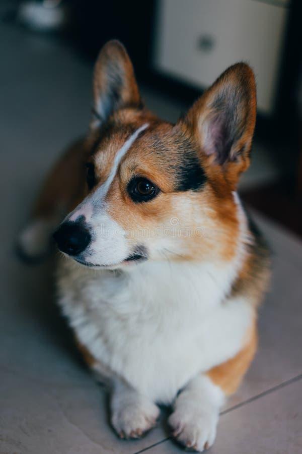 Kirky-Hundenamenas in Shanghai lizenzfreie stockfotos