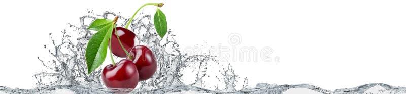 Kirsch- und Wasserspritzen auf weißem Hintergrund vektor abbildung