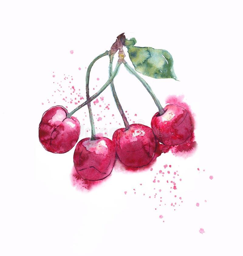 Kirschbündel-Aquarell illustraton Freie gemalte nass Art, Flüssigkeit spritzt lizenzfreie stockfotografie