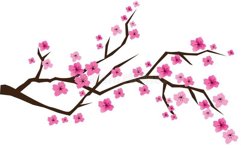Kirschblüte vektor abbildung