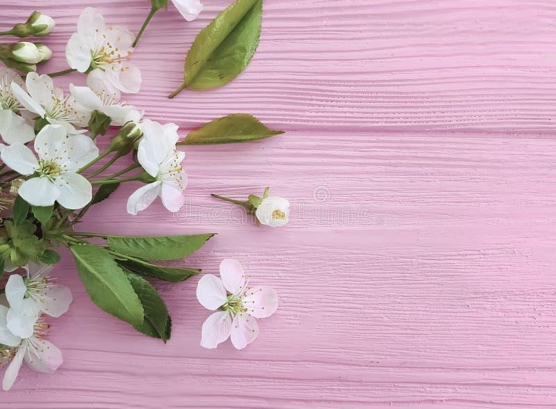 Kirschblüte auf Pastellrahmenhintergrund des rosa hölzernen Dekorationsfarbgrenzretro- Designs stockbilder