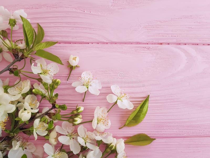 Kirschblüte auf Pastellrahmenhintergrund des rosa hölzernen Schönheitsdekorationsfarbgrenzretro- Designs stockfotografie