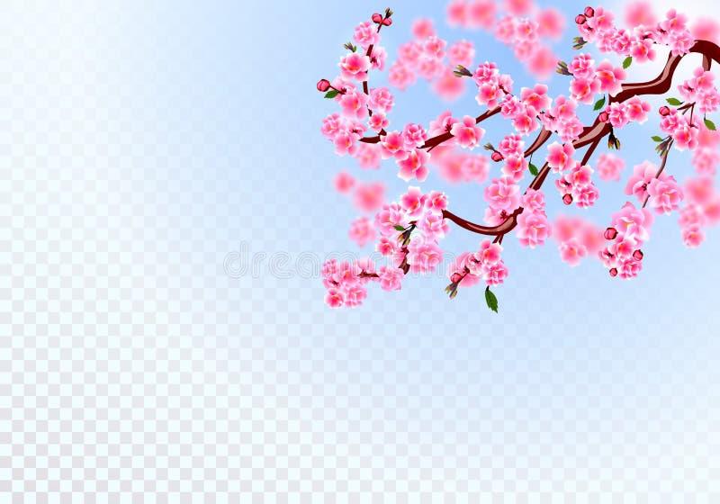 Kirschblüte E Defocus-Effekt auf einem transparenten Hintergrund Abbildung stock abbildung