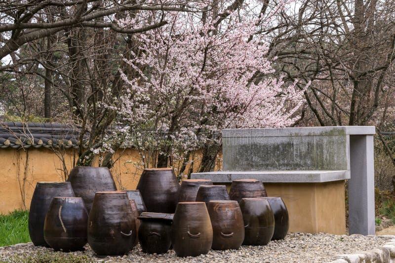 Kirschblüte in einem Garten lizenzfreie stockfotos